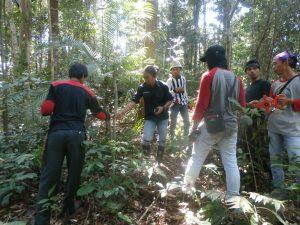 Anveg Hutan Tropis Dataran Rendah (TNBD)